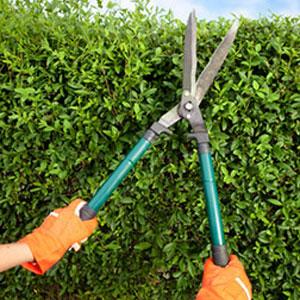 illu-jardinage